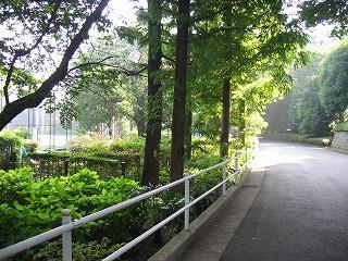 緑あふれる公園(右側)