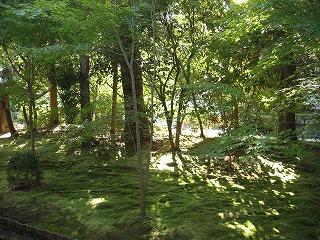 上記のお寺のお堂脇には、美しさのあまりため息の出るような庭が・・・