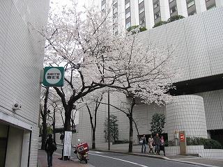 桜坂の入口