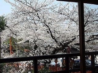 住職とお花見をしたお茶屋さんの部屋から(通行人の注目を集めまくりでした・・・)