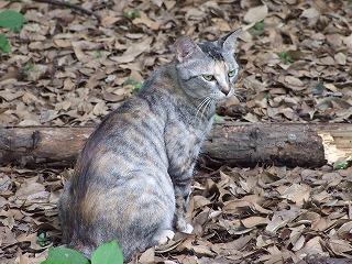 なぜかフレンドリーな野良猫を発見!