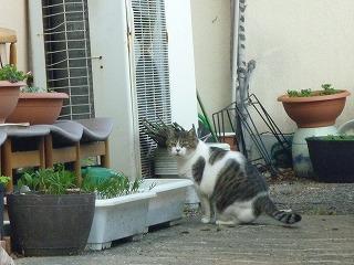 たまに現れる民家、そこにいた猫