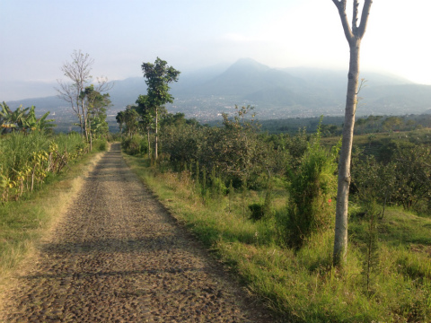 東ジャワでトレイルラン:どこまでも続く道