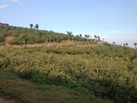 東ジャワでトレイルラン:右から左へ走ってきたコースをふりかえって