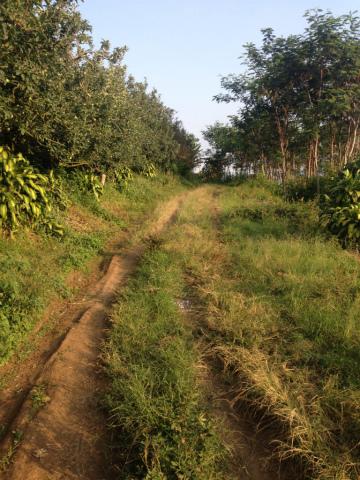 東ジャワでトレイルラン:こういうロードの一歩一歩が楽しい!