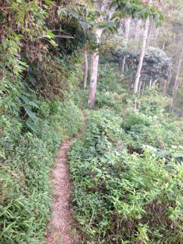 東ジャワでトレイルラン:ついつい走り出したくなるような光景