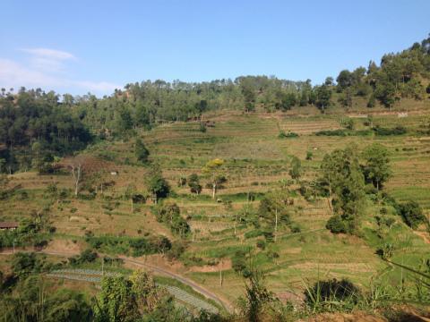 東ジャワでトレイルラン:目の前を左右に走るコースをたどりながら上を目指します