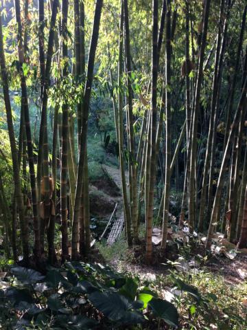 東ジャワでトレイルラン:竹の空間。なんて神秘的!