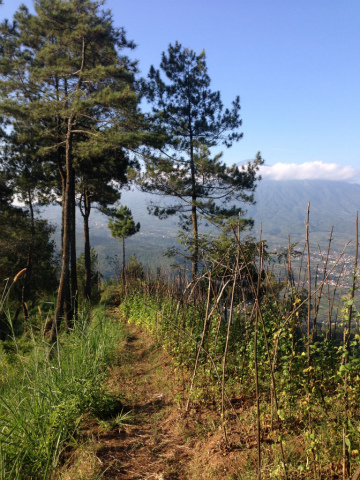 東ジャワでトレイルラン:右側の見晴らしを堪能しながら前を向いて走れる幸せ