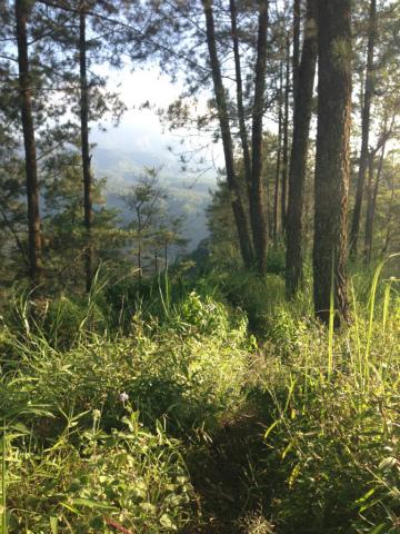 東ジャワでトレイルラン:コースが見えませんが、ここも草をかき分けて進みます