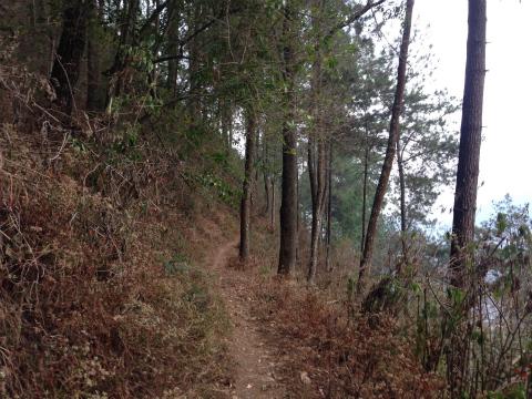ついつい走り始めたくなる山道