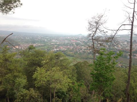 ソンゴリティ(Songgoroti)のバニャック山(Gunung Banyk)でトレイルラン&ウォーキング