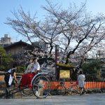 京都、高台寺・圓徳院住職との会食にて桜と人生を思う(その1)
