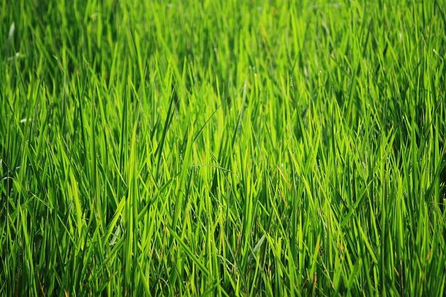 インドネシア 緑