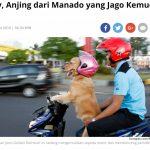 犬がバイクを運転!|インドネシア、北スマトラのびっくり映像!