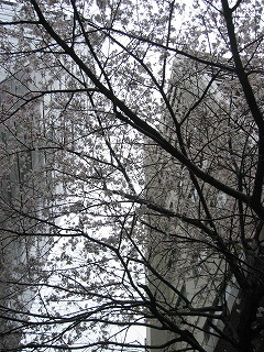 最初に出会った桜の木