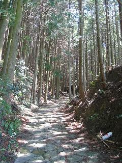 あたたかな日差しを浴びる熊野古道