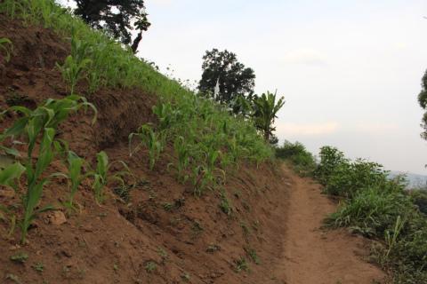 東ジャワでトレイルラン:こんな急斜面にも作物が
