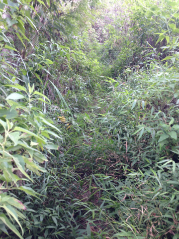 東ジャワでトレイルラン:草むらをかき分けて・・・