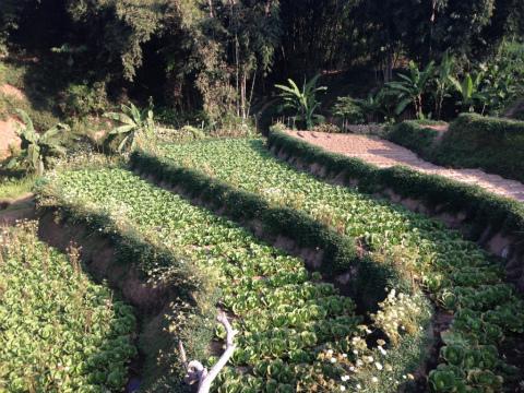 東ジャワでトレイルラン:こんなところも使うのかと、地元の皆さんの努力に敬服
