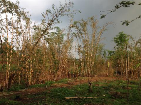 インドネシア:東ジャワ、マランのルンバ・ディエンLembah Dieng)でトレイルラン&ウォーキング