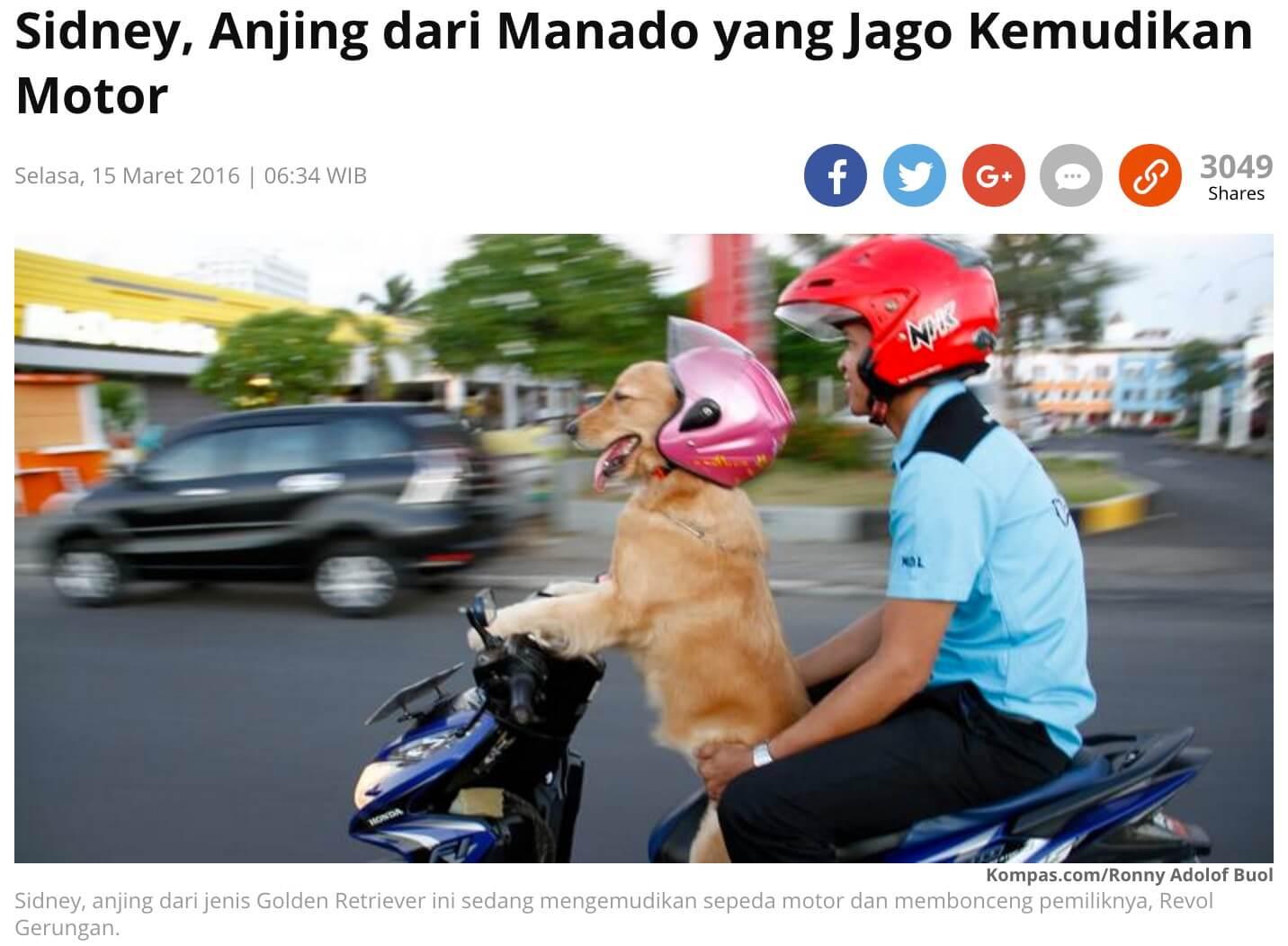 犬がバイクを運転 インドネシア北スマトラ