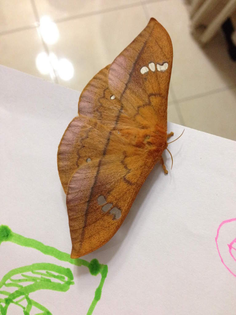 「葉っぱが落ちてきたと思ったら蝶だった」というジャワの自然の神秘