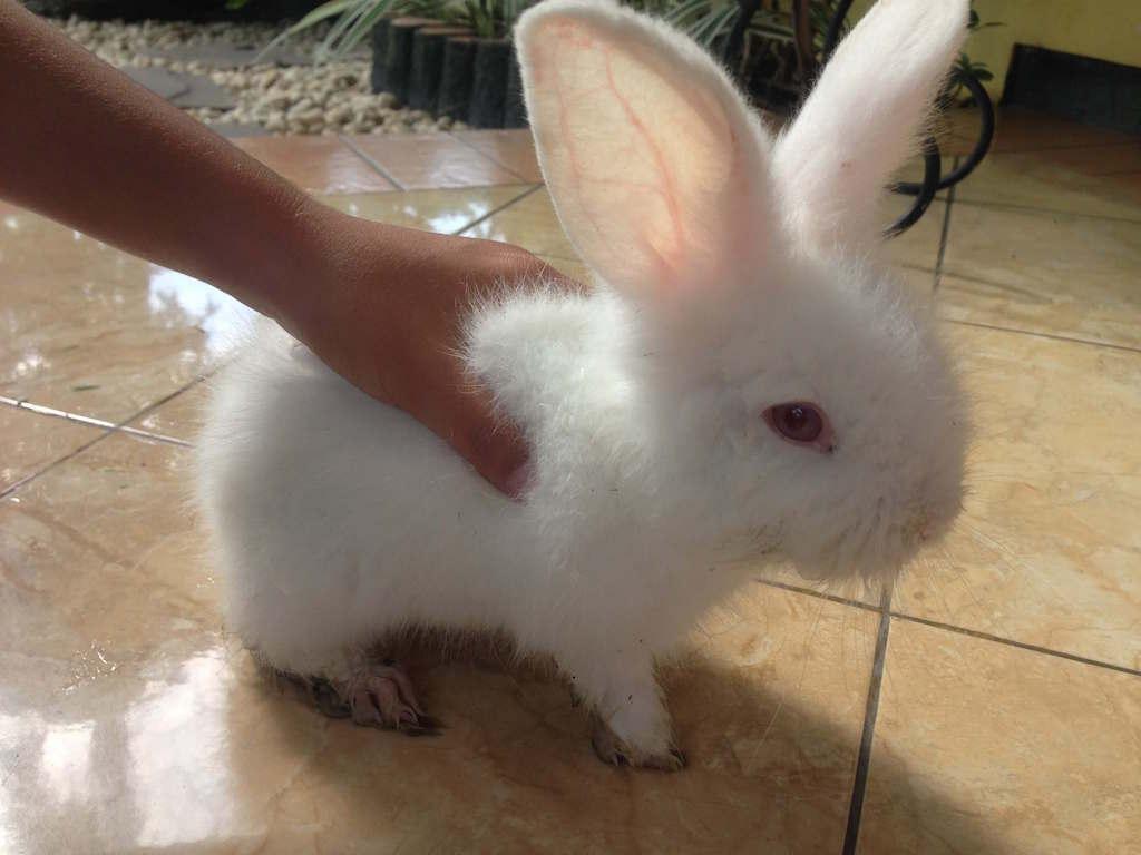 ウサギ インドネシアの家にやってきた!