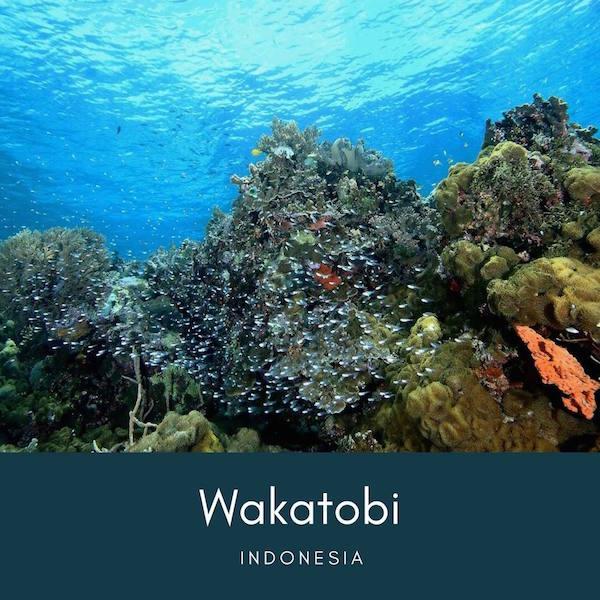 インドネシアのワカトビ(Wakatobi)