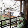 京都、高台寺・圓徳院住職との会食にて桜と人生を思う(最終回)
