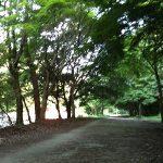 旅ラン|京都で早朝ジョギング、25kmコースの美しさと走破の感動!