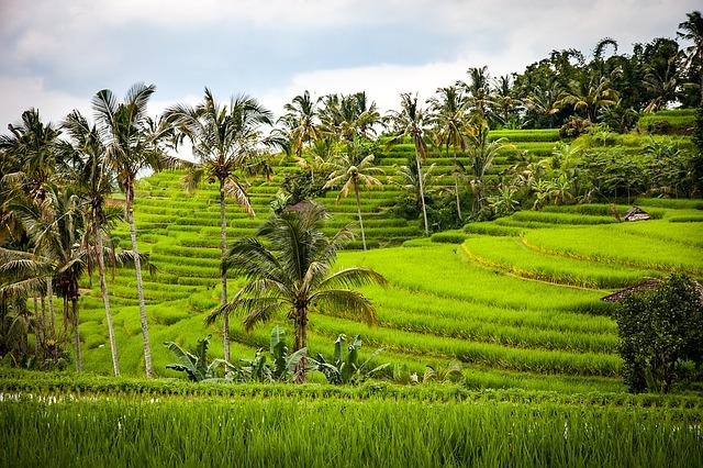 インドネシアの風景 棚田