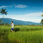 インドネシア語、ジャワ語、英語、日本語、中国語、マラン語の6つの言語に囲まれて過ごす海外生活
