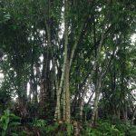 東ジャワのタジナンで、雨の中を子連れトレイルラン&ウォーキング(距離6.14km、標高差151m)