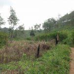 東ジャワのバトゥ(プレセット)でトレイルラン&ウォーキング(距離4.93km、標高差197m)